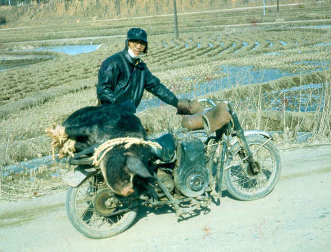 Korea Harley Hog 1973-1974. Notice the 250 pound hog on the back rack of the Motorcycle owned by  one of the locals.