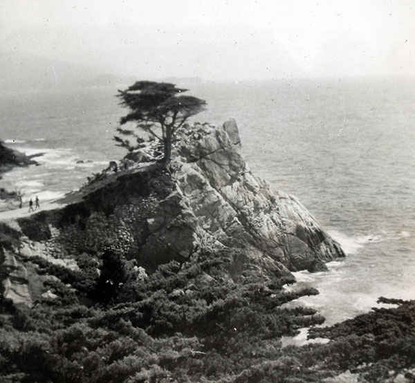 The lone cypress at the foot of the 17-mile drive in California still stands today.