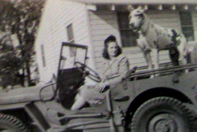 Robert's wife Ruth sitting a Jeep with the Captain's dog.