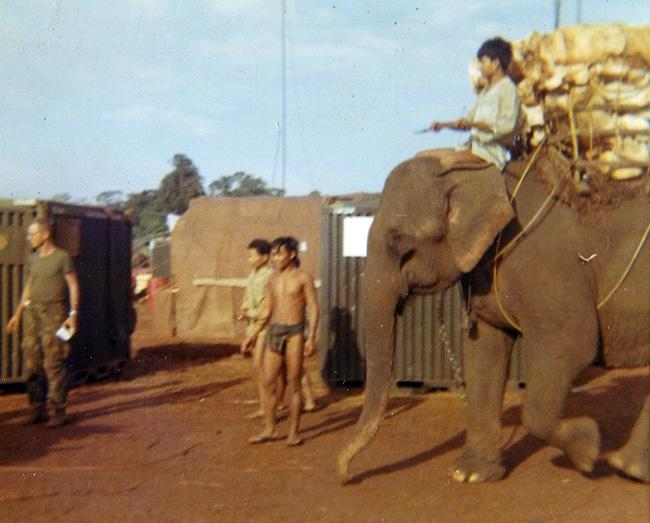 "Vietnamese locals ""Mountainards"" using elephants to haul supplies."