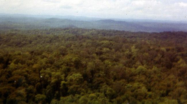 Tree tops in Vietnam from helicopter.